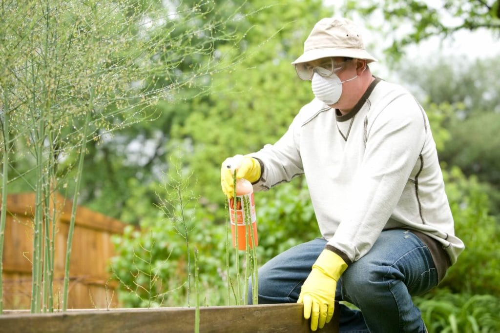 Man spraying pesticides on his garden