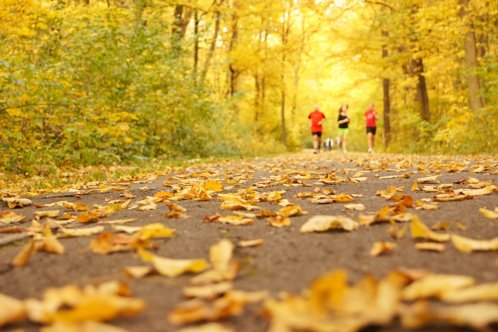Brown leaves on the ground with people running on the background