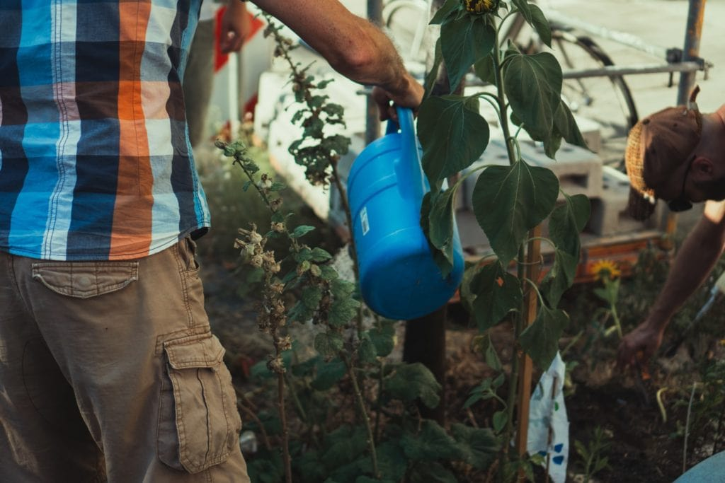 Man in orange shirt watering a plant