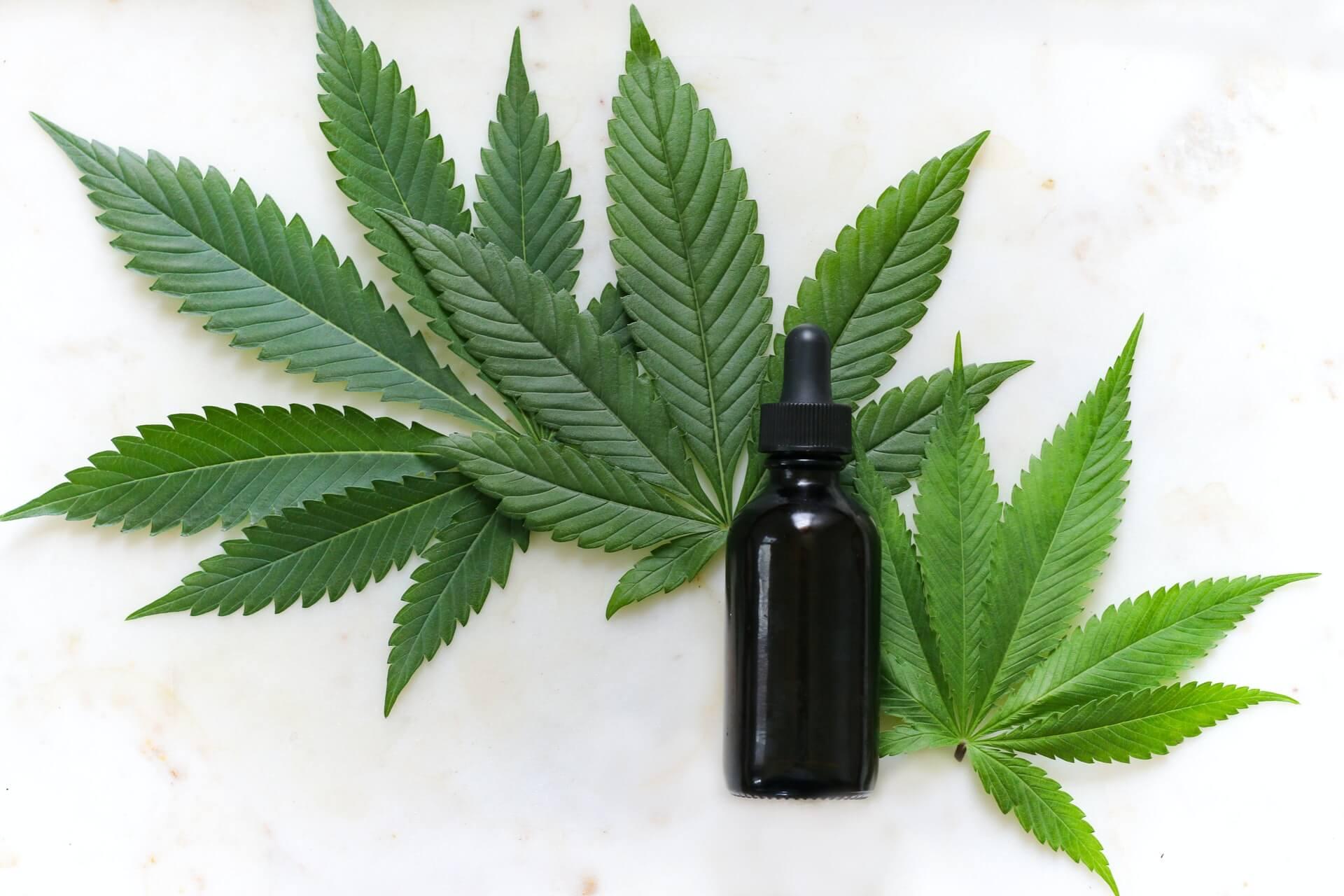 Hemp or cannabis tincture