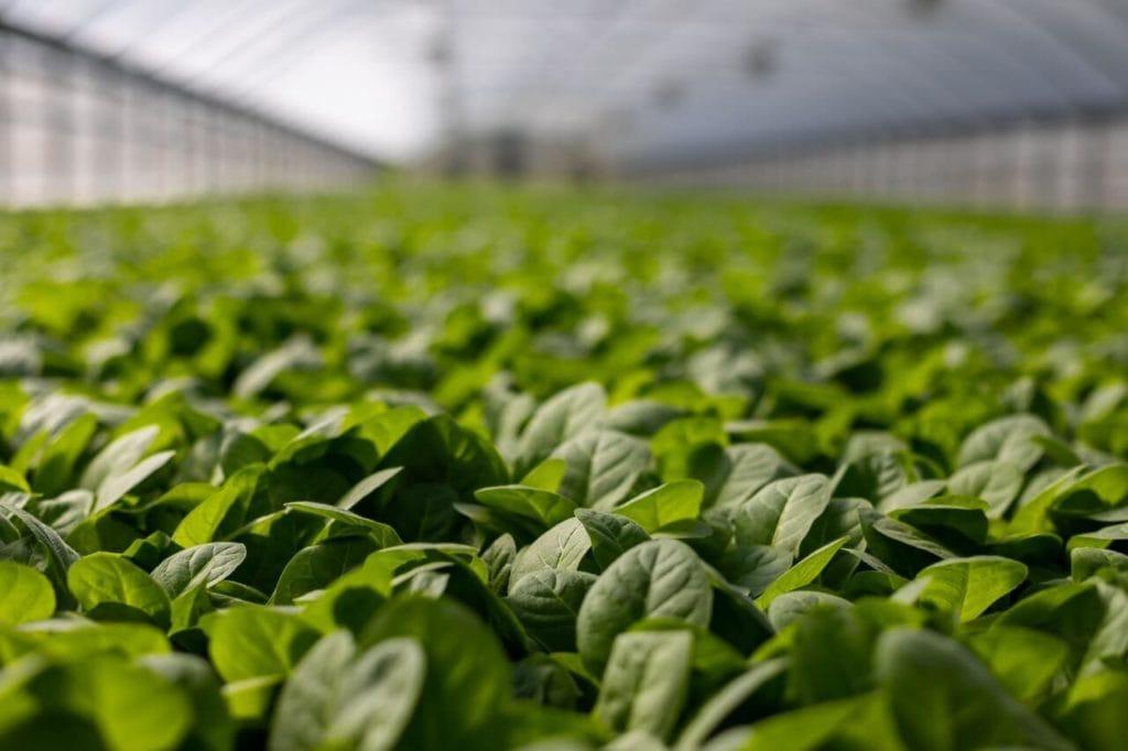 Photo of plants inside greenhouse
