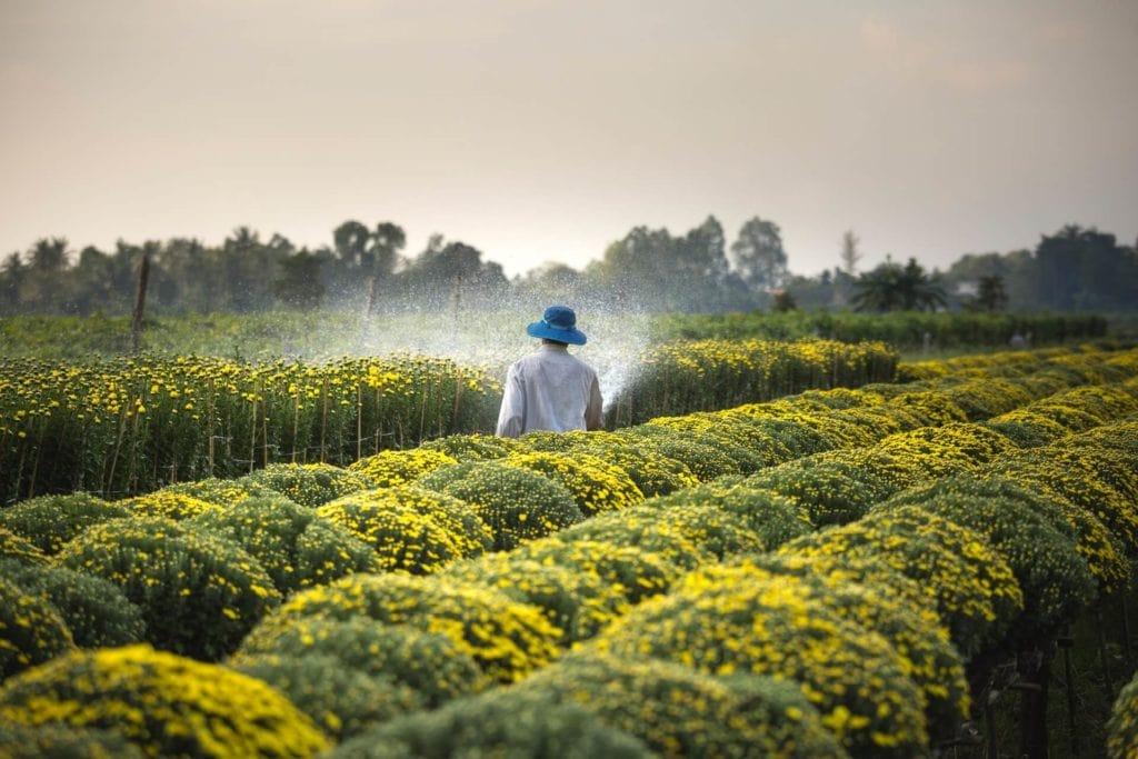 Image: Pesticide exposure and brain cancer