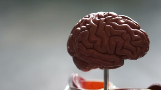 Alzheimer's and the brain featured image