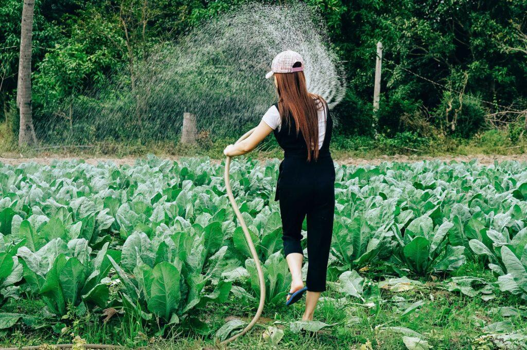 Image: How do pesticides affect humans